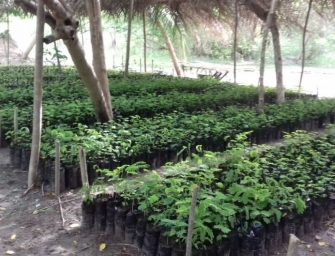 Bäume für Togo: #memoaroundtheworld goes planting