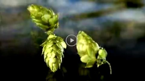 Video: Krombacher