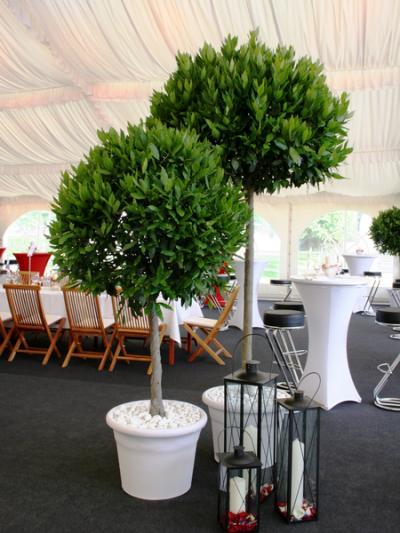 meyflower berlin gr n auf leihbasis aus berlin pflanzenverleih mietpflanzen memo. Black Bedroom Furniture Sets. Home Design Ideas