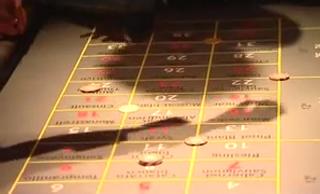 Video: Casino  Vinophil