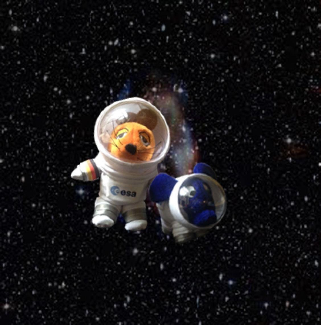 Maus und Elefant in unserem Weltraumanzügen und derzeit mit Astro-Alex im All!!!