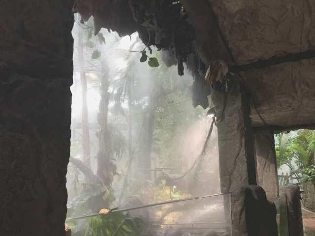 Regen und Dunst für den Regenwald?