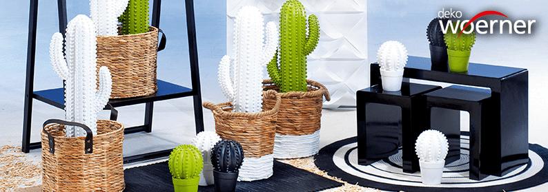 Kaktus-Hype